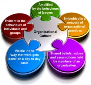 organization  culture model
